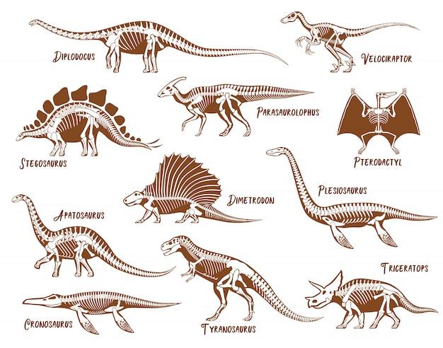 Conjunto de esqueleto de dinossauros