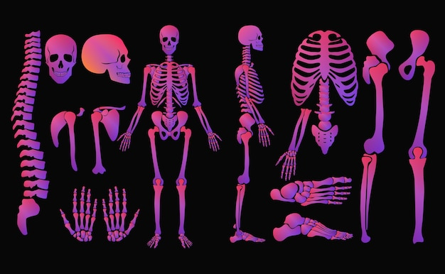 Conjunto de esqueleto de estilo de néon de cores brilhantes de ossos humanos. cor gradiente de alto brilho detalhado