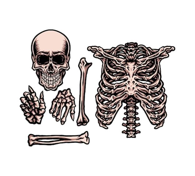 Conjunto de esqueleto humano, estilo de linha desenhada à mão com cor digital, ilustração