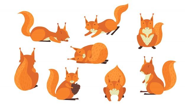 Conjunto de esquilo peludo vermelho bonito