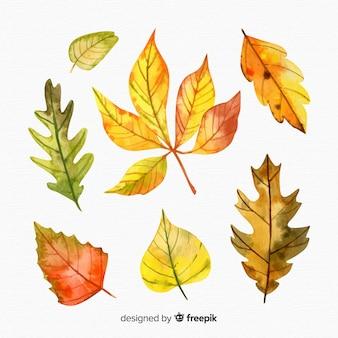 Conjunto de estilo aquarela de folhas de outono