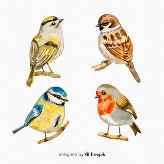 Conjunto de estilo aquarela de pássaros