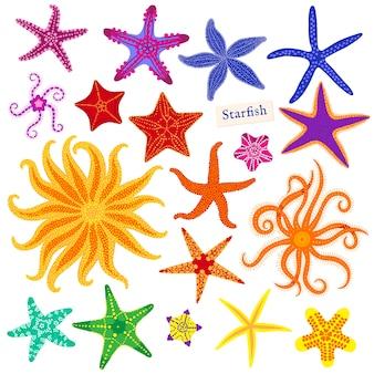 Conjunto de estrelas do mar. estrela do mar multicolorida