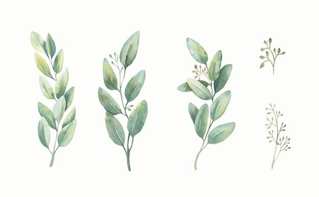 Conjunto de eucalipto de folhas verdes em aquarela.