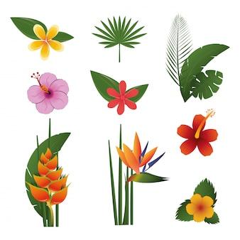 Conjunto de exóticos tropicais de flores