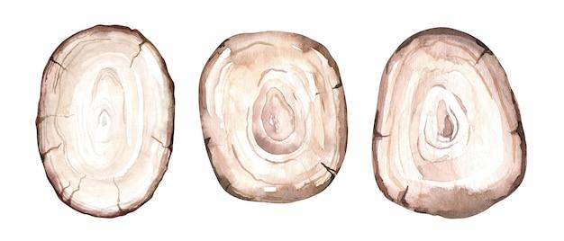 Conjunto de fatias de madeira em aquarela. anéis de árvores. textura de madeira desenhada à mão