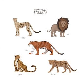 Conjunto de felinos dos desenhos animados