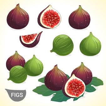 Conjunto de figo escuro e figos verdes em vários estilos vector format