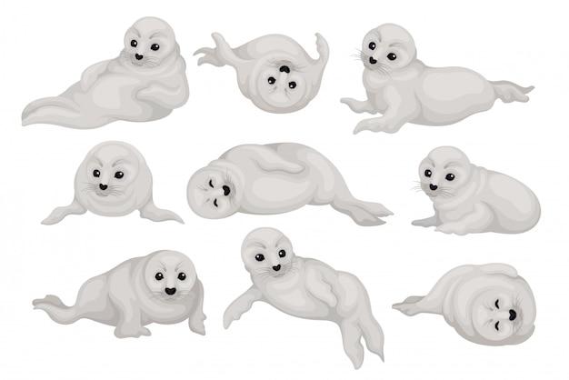 Conjunto de filhotes de foca bonito em poses diferentes. animal do ártico com pêlo cinzento e olhos pretos brilhantes. mamífero marinho