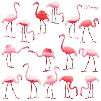 Conjunto de flamingo rosa.