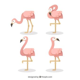 Conjunto de flamingos com diferentes posturas