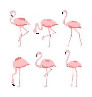Conjunto de flamingos cor de rosa elegantes bonitos em poses diferentes sobre fundo branco, pássaros tropicais exóticos para o conceito de verão em estilo cartoon plana.
