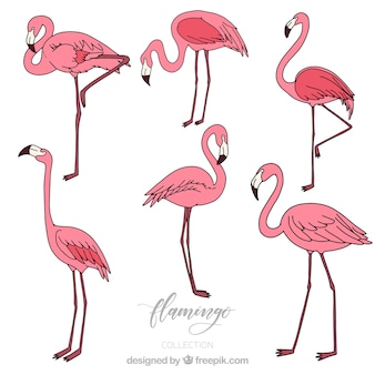 Conjunto de flamingos cor de rosa na mão desenhada estilo