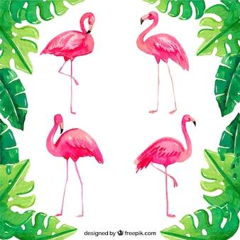 Conjunto de flamingos em diferentes posturas