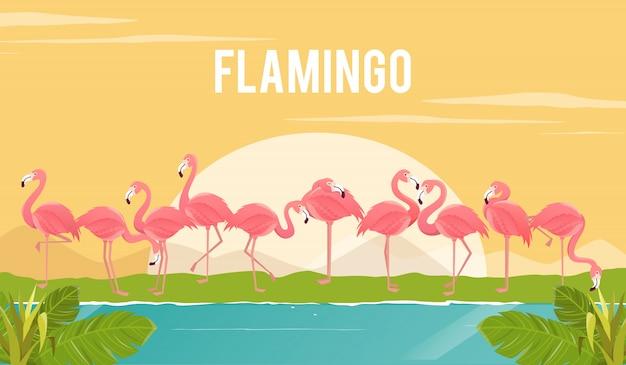 Conjunto de flamingos no fundo. ilustração.