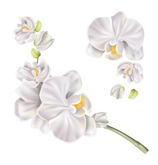Conjunto de flor de orquídea branca realista de vetor
