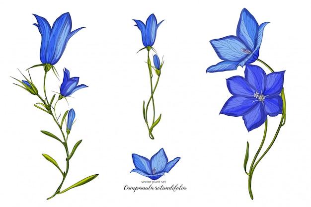 Conjunto de flor de sino floral vetor. conjunto de plantas florais.