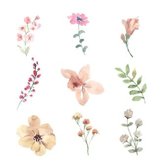 Conjunto de flor em aquarela, ilustração desenhados à mão