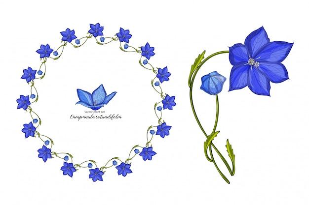 Conjunto de flor floral sino vector