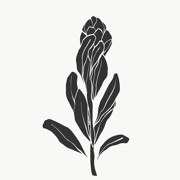 Conjunto de flor protea e folhas tropicais alinham-se sobre botões de buquê de presente de feriado de fundo branco