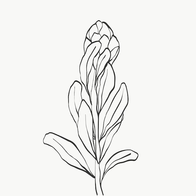 Conjunto de flor protea e folhas tropicais alinham sobre fundo branco. presente de feriado, buquê, botões. um belo tiro de macro de flores de moda. desenho de ilustrações vetoriais.