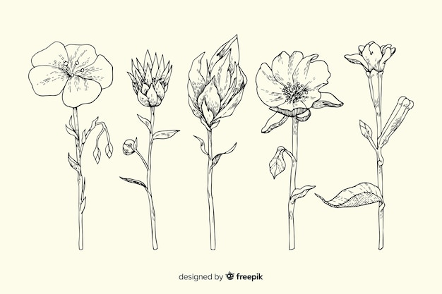 Conjunto de flor realista botânica vintage mão desenhada