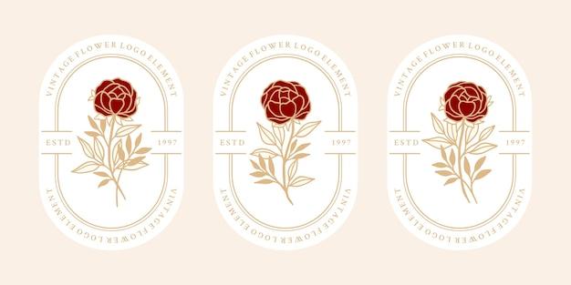 Conjunto de flor rosa botânica vintage desenhada à mão e elementos de ramo de folha para logotipo feminino e marca de beleza