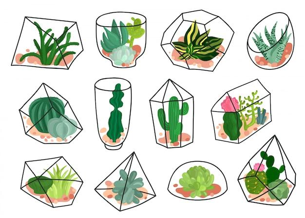 Conjunto de florariums geométricos de cactos suculentas