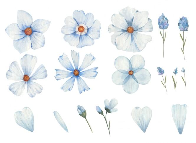 Conjunto de flores azuis de diferentes tipos clipart ilustração aquarela sobre fundo branco