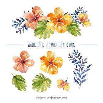 Conjunto de flores coloridas em estilo de watecolor