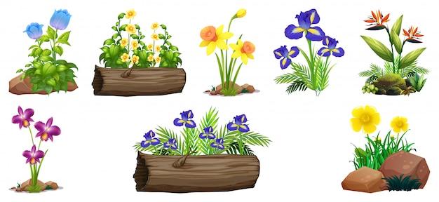 Conjunto de flores coloridas em pedras e madeira