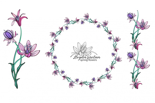 Conjunto de flores cor de rosa. guirlanda. ramalhete. flores da primavera