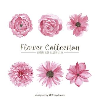 Conjunto de flores cor de rosa