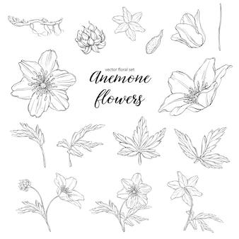 Conjunto de flores de anêmona preto e branco floral
