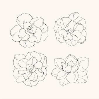 Conjunto de flores de gardênia desenhadas à mão