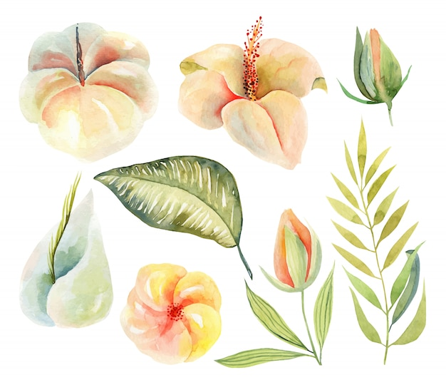 Conjunto de flores de hibisco em aquarela e plantas verdes tropicais e folhas, pintados à mão ilustração isolada