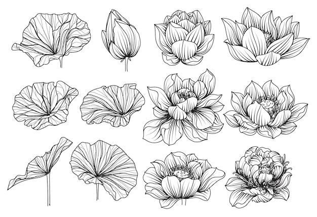 Conjunto de flores de lótus, desenho e esboço em preto e branco