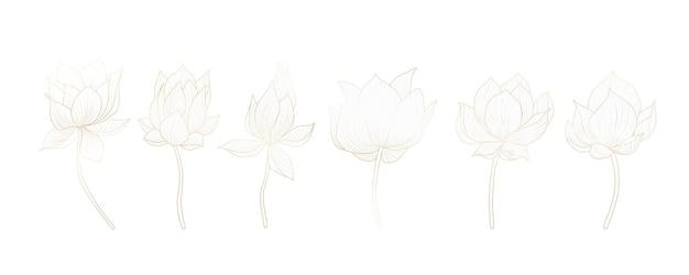 Conjunto de flores de lótus em branco para decoração de convites, banners web, redes sociais.