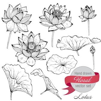 Conjunto de flores de lótus mão desenhada e folhas.