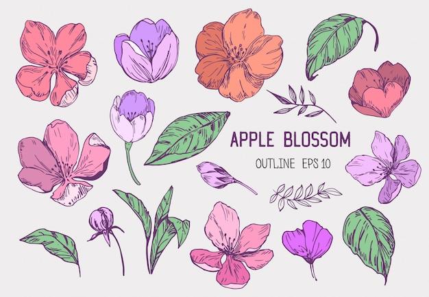 Conjunto de flores de maçã. ilustração de mão desenhada convertida em. isolado