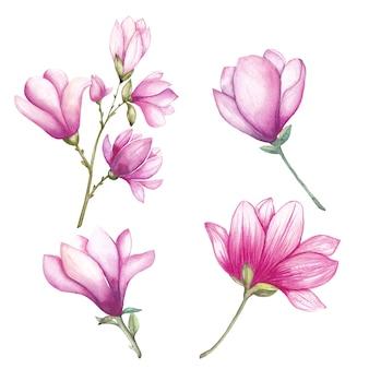 Conjunto de flores de magnólia em aquarela
