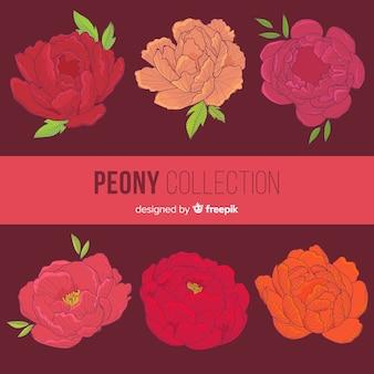 Conjunto de flores de peônia