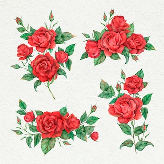 Conjunto de flores de rosa vermelha desabrochando