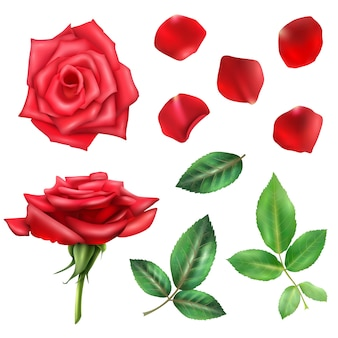 Conjunto de flores de rosas e pétalas