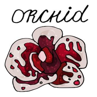 Conjunto de flores de uma orquídea desabrochando em um fundo branco isolado. o contorno é desenhado à mão
