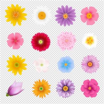 Conjunto de flores de verão transparente fundo