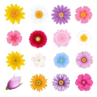 Conjunto de flores de verão