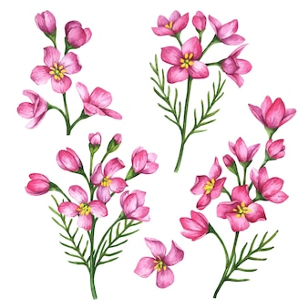 Conjunto de flores de vetor com ilustração floral desenhada à mão, isolada em um fundo branco.