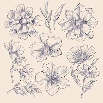 Conjunto de flores desenhadas à mão para gravura