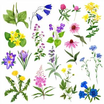 Conjunto de flores do campo em aquarela, plantas e ervas selvagens